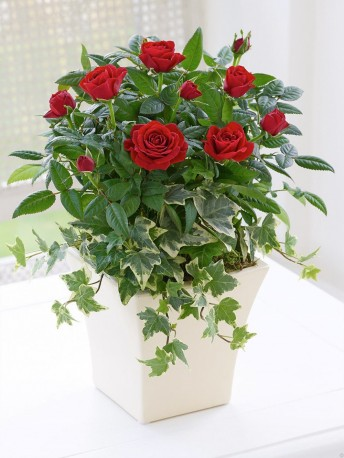 Classic Red Rose Planter