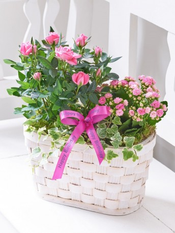 Happy Birthday Pink Rose & Kalanchoe Basket