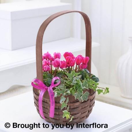 Happy Birthday Pink Cyclamen Basket