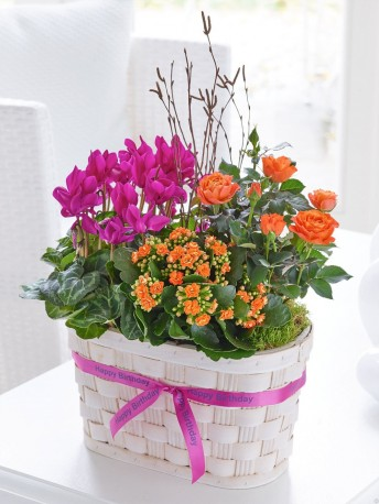 Happy Birthday Golden Sunset Planted Trug