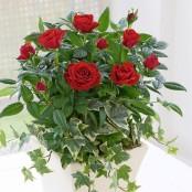 Classic Red Rose Planter