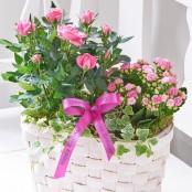 Happy Birthday Pink Rose & Kalanchoe Basket
