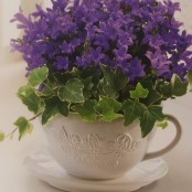 Purple Campanula Teacup