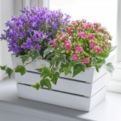 Summer Flowering Planter