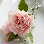Pink Spray Rose Boutonniere