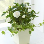 Classic Cream Rose Planter