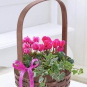 Happy Birthday Pink Cyclamen Basket