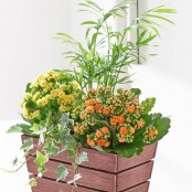 Kalanchoe and Palm Planter