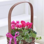 Happy Birthday Pink Cyclamen Basket with Chocolates