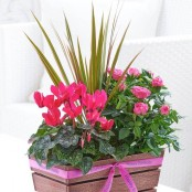 Happy Birthday Rosy Pink Autumn Planter with Chocolates